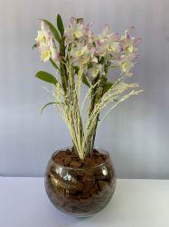 Orquídea Dendrobium no vaso de vidro