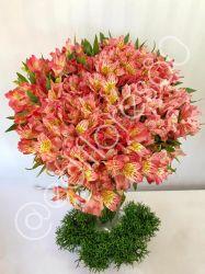 Astromelia Rosa